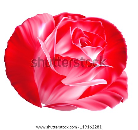 Realistic purple rose isolated on white background - stock photo