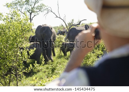 Rear view of a blurred man taking photograph of group of elephants - stock photo