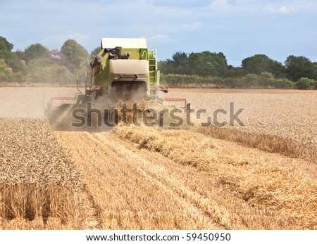 rear view of a combine harvester collecting wheat from a field