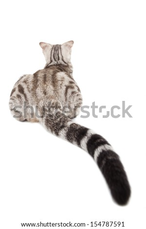 rear view of cat with long tail - stock photo