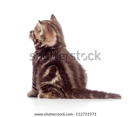 rear view of tabby-cat kitten isolated on white - stock photo