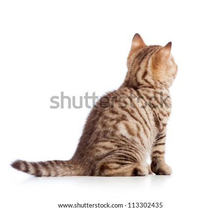 rear view of tabby-cat kitten isolated on white