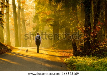 Rear view of young woman walking with dog on road through colorful autumn forest. - stock photo