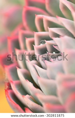 Rectangular arrangement of succulents, cactus succulents. Macro. For background use. Selective focus.  - stock photo