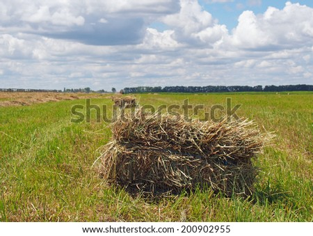 Rectangular bales of hay on the field - stock photo