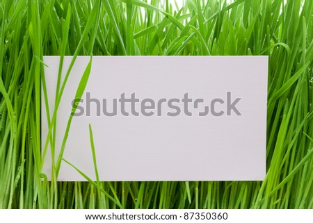 Rectangular white sign amongst fresh green grass blades - stock photo
