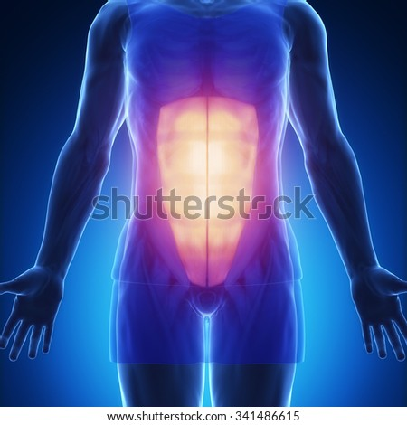rectus abdominis - stock photo
