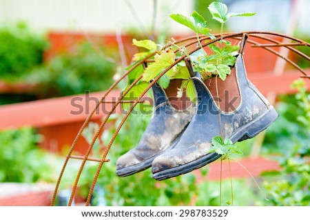 Recycle or up cycle in the garden. Here is a pair of boots hanging from iron rebar. Boots contain plants of wild strawberrys. - stock photo