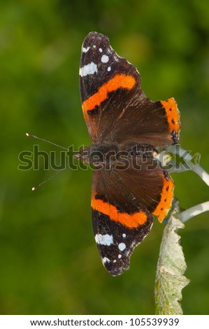 red admiral soaking up the summer sun - stock photo