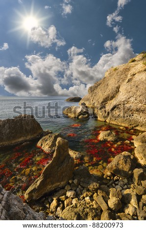 red algae on the rocks in the sea - stock photo