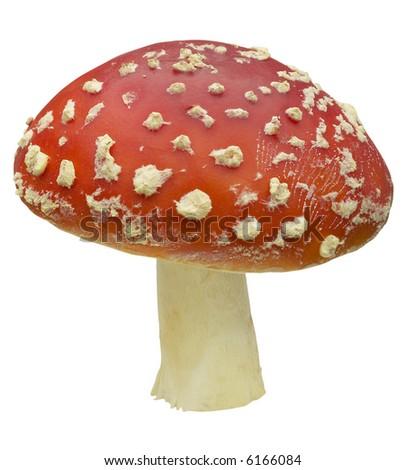 Red Amanita - isolated on white - stock photo