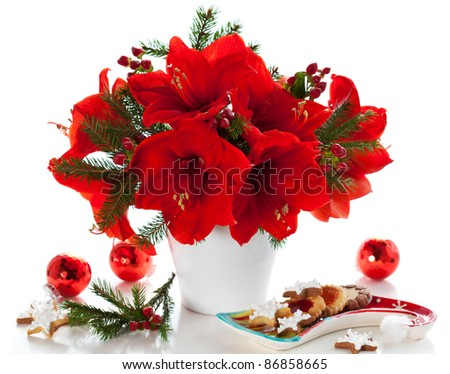 red amaryllis in vase and cookies for Christmas decoration - stock photo