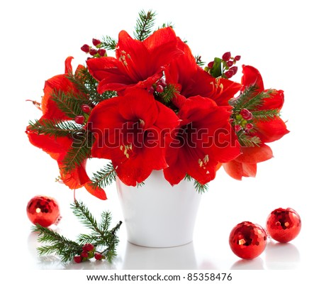red amaryllis in vase with Christmas decorations - stock photo