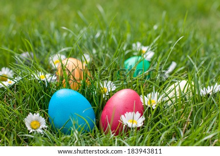 Red and Blue Easter egg in a nest of grass and spring flowers