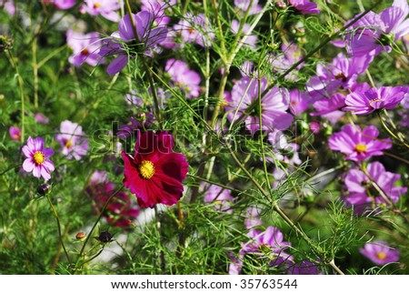 red and blue flowers - stock photo