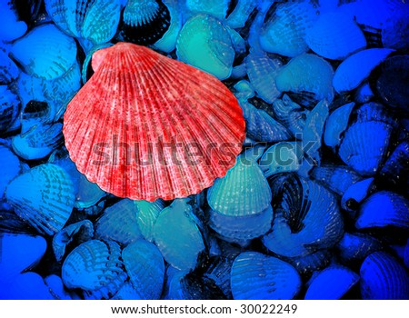 red and blue sea shells as background - stock photo