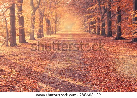 Red and colorful autumn colors in the forest with a road and sunshine in the fall season