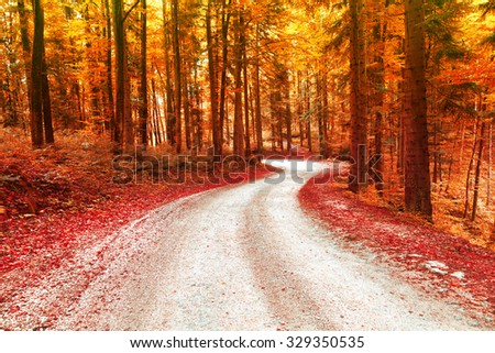 Red and gold color saturated autumn season forest with beautiful winding road. Magical oversaturated forest tree leaves. - stock photo