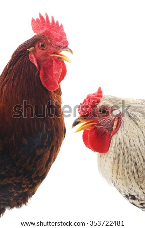Red and gray cocks isolated on a white background.
