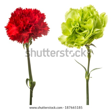 Red and green carnation isolated on white