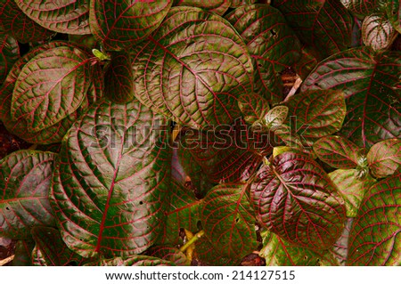 red and green leaves - stock photo