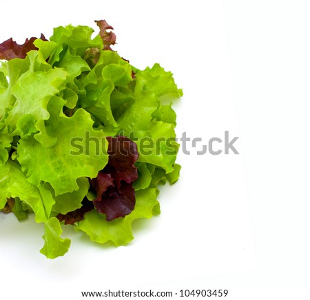 red and green lettuce salad leafs - stock photo