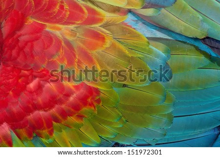Red-and-green Macaw  feathers - stock photo