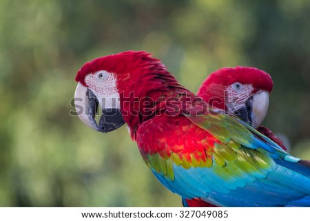 Red and green Macaw - Mato Grosso State - Brazil - stock photo