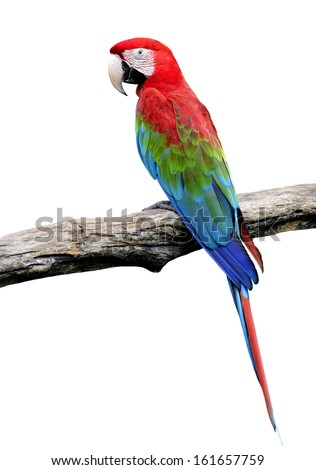 Red-and-green Macaw Parrot bird isolated on white background (green-winged macaw) - stock photo