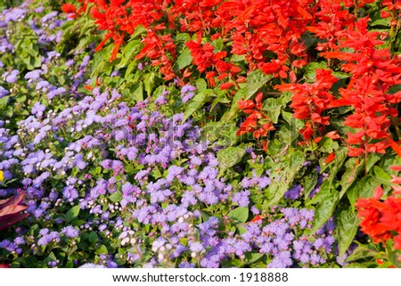 Red and lilac flowers on a bed.