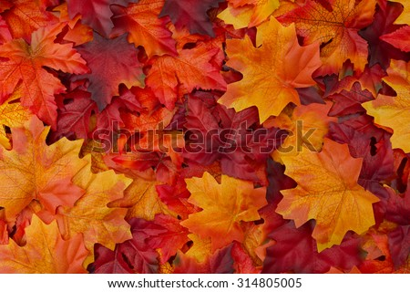 Red and Orange Autumn Leaves Background - stock photo