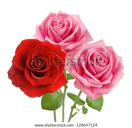 Red and pink roses bunch isolated on white background