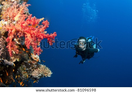red and pink soft corals and scuba diver - stock photo