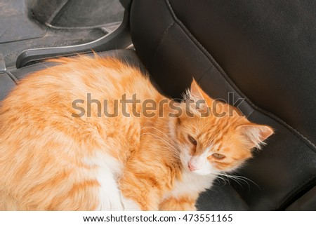 Red and white cat lying on black leather chair on the street