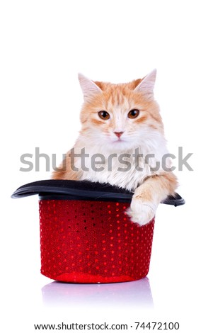 red and white cat relaxing in a show hat, over white