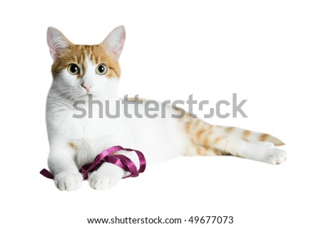 red and white cat with purple ribbon isolated - stock photo
