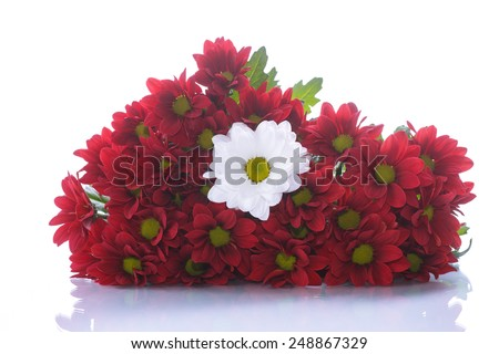 red and white chrysanthemums on a white background