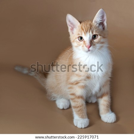 Red and white kitten sitting on brown background