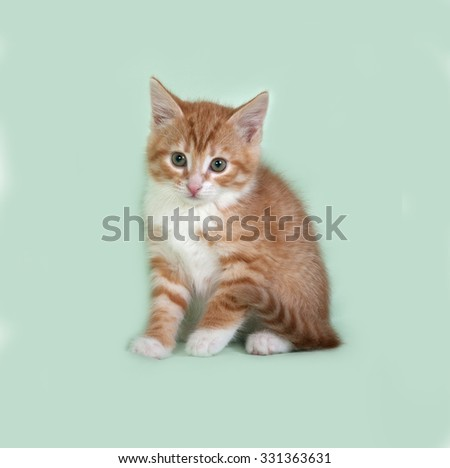 Red and white kitten sitting on green background