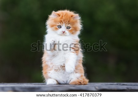 red and white playful kitten outdoors - stock photo