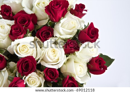 Red and White roses isolated on a white background with space for text - stock photo