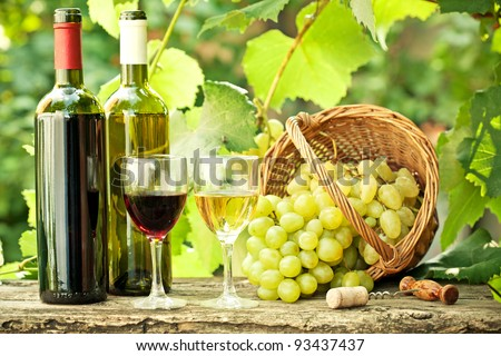 Red and white wine bottles, two glasses and bunch of grapes in basket against vineyard in spring