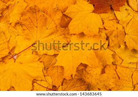 red and yellow decorative maple leafs fall background - stock photo