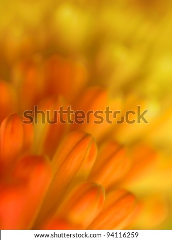 Red and yellow flower background, soft focus - stock photo