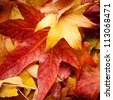 red and yellow leafs in autumn colorful background - stock photo