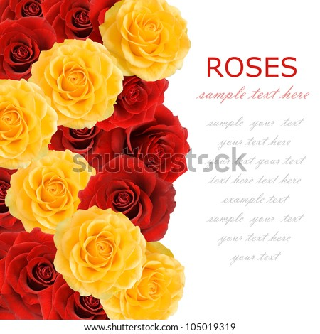 Red and yellow roses background isolated on white with sample text - stock photo