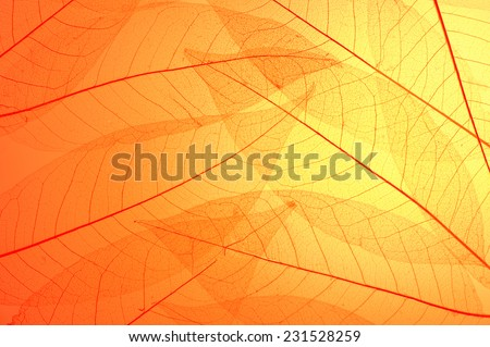 Red and yellow skeleton leaves  abstract background - stock photo
