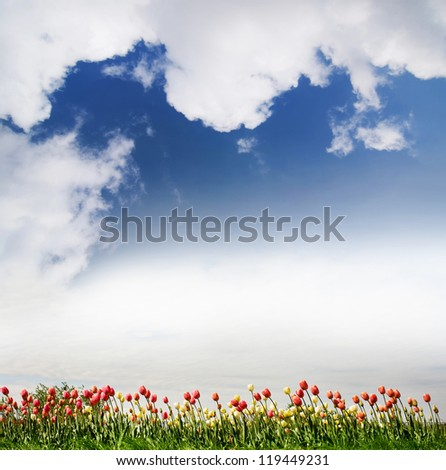 Red and yellow tulips and cloudscape view in Poland.