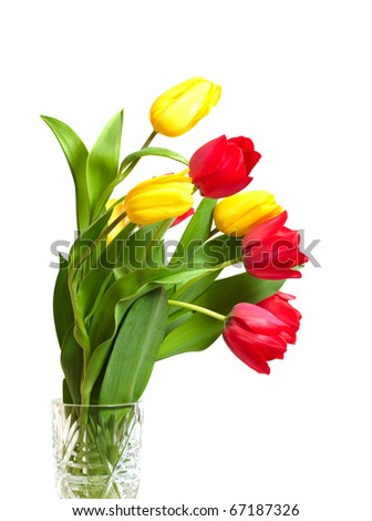 Red and yellow tulips isolated on white - stock photo