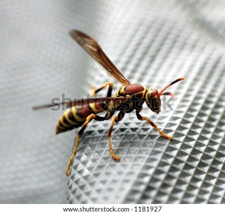 Red and yellow wasp / hornet on textured background - stock photo